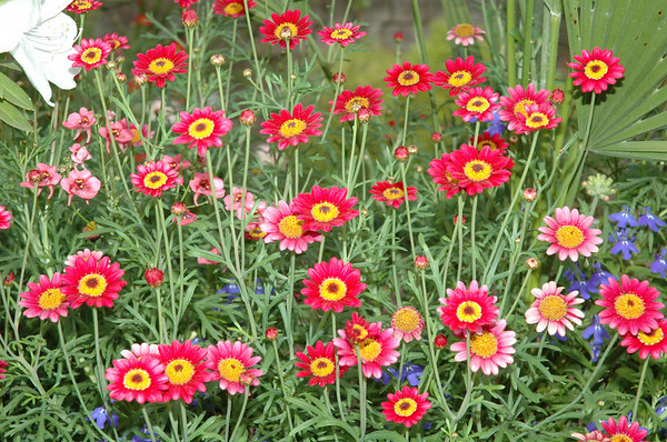 """Wednesday, June 27<br /> Flowers in the Massie School courtyard<br /> Savannah, GA<br /> <br /> <br /> """"Every tree and plant in the meadow seemed to be dancing, those which average eyes would see as fixed and still""""<br /> ~ Jalal ad-Din Rumi<br /> <br /> <br /> <br /> <br /> <br /> <br /> <br /> <br /> <br /> <br /> Massie Heritage Center:<br /> <a href=""""http://www.massieschool.com/"""">http://www.massieschool.com/</a><br /> Savannah, GA:<br /> <a href=""""http://moorememories.smugmug.com/gallery/3039464"""">http://moorememories.smugmug.com/gallery/3039464</a>"""