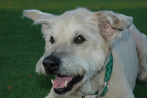 """Monday, June 11<br /> GOODBYE SAM!<br /> <br /> My neighbor's 15 year old dog was laid to rest this morning.  Sam will be missed!<br /> <br /> """"Did you ever walk into a room and forget why you walked in? I think that is how dogs spend their lives.""""<br /> ~Sue Murphy"""
